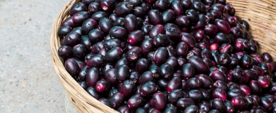 Jamun|Its English Name|Nutritional facts|Health Benefits